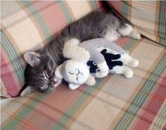 "A nap is so much better when you have a ""snuggle"" buddy..."