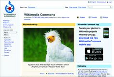 """Wikimedia Commons is one of the largest online repositories of media files. Built from the works shared by thousands of volunteers, Commons hosts educational images, videos, and audio files that are used by Wikipedia and the other projects of the nonprofit Wikimedia Foundation. All of the works on Commons are under a """"free license."""" Multimedia, View Source, Wikimedia Commons, Volunteers, Videos, Projects, Foundation, Free, Public Domain"""