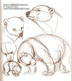 sketching bear cubs | Source: Referenced from videos and photos of polar bears at Wilhelma ...