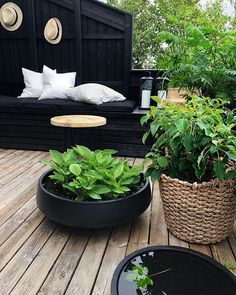 The planters are filling up nicely in this sunny weather terrasseliv terracelife plants summertime outdoordesign gardendesignbythereseknutsen gardendesigner uterom hage