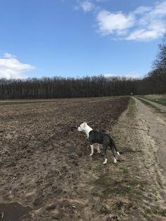 My pitbull ❤️ Pitbull Bull Terrier, Cute Pitbulls, Blue Bloods, Horse Love, Pit Bull, Horses, Mountains, Dogs, Photography