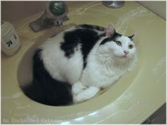 Cats love sinks!