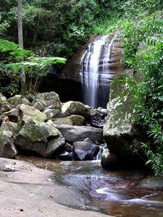 Buderim Forest Park, Sunshine Coast, Queensland Forest Park, Sunshine Coast, Paladin, Australia Travel, Waterfalls, Brisbane, Walks, Places To See, Landscapes