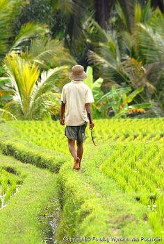 Rice farmer in Bali, Indonesia Bali Lombok, Ubud, Beautiful Islands, Beautiful Places, Laos, Les Philippines, Vietnam, Bali Honeymoon, Les Continents
