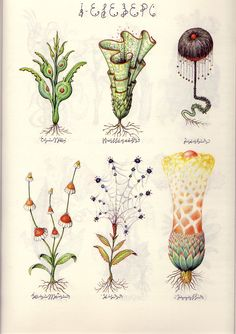 LUIGI SERAFINI: Codex Seraphinianus, considered by many to be among the strangest and most vexing books in the world, was written and illustrated by Italian graphic designer and architect, Luigi Serafini during the mid- to late 1970's. The Codex is a masterpiece of fantasy painstakingly illustrating an encyclopedia, a travelogue or scientific study for an imaginary world in a parallel universe, with copious commentary in an incomprehensible language. This is a rare signed first edition.