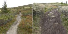 Moderne aktiviteter som terrengsykling og ridning åpner naturen for flere, men den økte bruken av turstier sliter på vegetasjonen rundt stiene, spesielt i våte områder. Det kommer fram i en ny rappor...