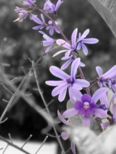 #lavendar #flowers #photgraphy