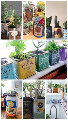 planten in blik Masala Chai, Earl Gray, Planter Pots, Lemon, Tea, Teas