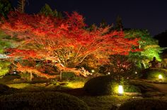 """Japanese autumn VII"". The japanese garden in autumn by night. www.phoclab.com by Claudio Beffa"