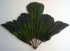 Antique fan with full body feathers of a Pigeon de Nicobar from Maison Duvelleroy, France. via le curieux Antique Fans, Vintage Fans, Hand Held Fan, Hand Fans, Edwardian Era, Victorian, Pigeon, Vintage Outfits, Vintage Fashion