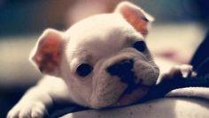 So, so cute.
