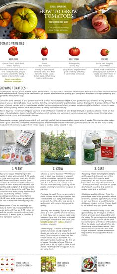 Growing Tomatoes, How to Grow Tomatoes & Tomato Care | Williams-Sonoma