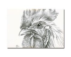 ROOSTER 9 chinese year hen coq SILVERPOINT* Sandrine Curtiss ORIGINAL Art ACEO #Realism