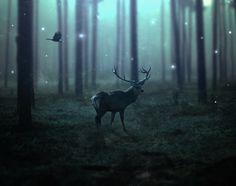 Create a Dark Emotional Deer Photo Manipulation in Photoshop