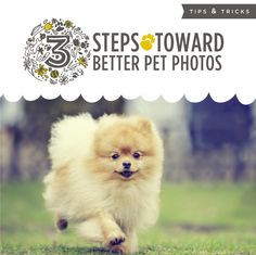 3 Steps Toward Better Pet Photos: Love your dog, cat, rabbit, ferret, or even horse and want to show the world? Do you find that your photos don't do justice to your pet's true personality? Here are a few tips from a professional photographer that we hope you'll find helpful!