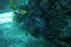 15 Blue Reef Aquarium, Pets, Animals, Animales, Animaux, Animal, Animais, Animals And Pets