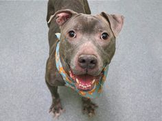 BISOO - A1100519 - - Manhattan  Please Share:TO BE DESTROYED 01/03/17  **ON PUBLIC LIST** A volunteer writes: He may look a little worse for wear on the outside but inside middle-aged Bisoo hides the happy heart of a puppy who never grew out of loving life and the people he shares it with and while the going may have gotten tough, he clearly never did. Bisoo's so thrilled to meet new friends and I find him waiting at the very front of his kennel with a wagging tail an