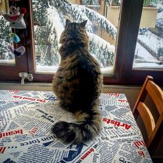 Just remember that you are weak and cats are the ultimate species. Now, go hug your furry, fearless friends.   13 Signs Your Cat Likes Winter More Than You Do