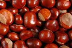 Cudowne właściwości kasztanowca Sweet Chestnut, Polish Recipes, Beauty Care, Nutella, Natural Remedies, Herbalism, Health And Beauty, Spices, Food And Drink