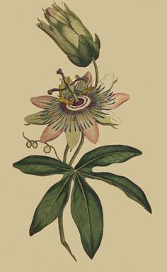 The Botanical Magazine, Vol. 1 - Card-Making-World.com - Adele Sweeney - Picasa Web Albums