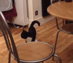 10+ gatos actuando de manera extraña. ¡El #17 está totalmente loco! – Página 4 – Mi Gato Curioso
