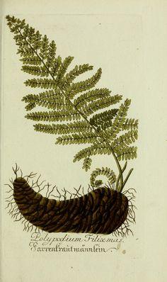 Plantarum indigenarum et exoticarum icones ad vivum coloratae, oder, Sammlung nach der Natur gemalter Abbildungen inn- und ausländlischer Pflanzen, für Liebhaber und Beflissene der Botanik /