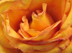 Petalos Naranja