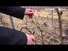 Grape Vines, Manual, Gardening, Youtube, Agriculture, Plant, Life, Vineyard Vines, Garten