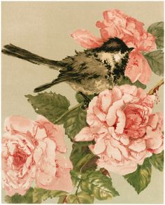 The Graphics Fairy: bird with pink flowers