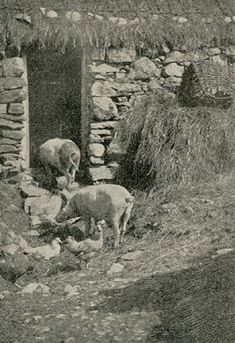 Irish Peasants, 1897