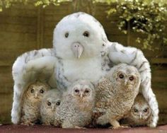 just enough childresn.... to hug under a stuffed owl :-)