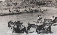 Indian army in Korean war