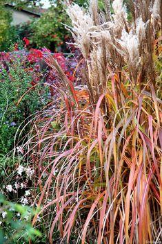 Im Oktober hat sich 'Ghana' wunderschön rot verfärbt Ghana, Flowers, Plants, Inspiration, Low Maintenance Garden, Shade Perennials, Nice Asses, October, Red