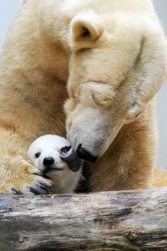 """Mama Love""  -- Wuppertal Zoo, Germany"