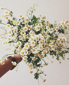 daisy do