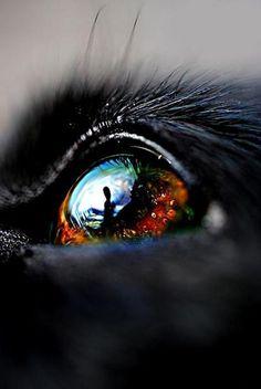"""Reflection from a pet's eyes... could be cool with Wally or Lady----Ojos mas bellos si ven vien. Controlate cada año. Lee ennuestro blog """" Como descansar frente a la PC """" y otros"""
