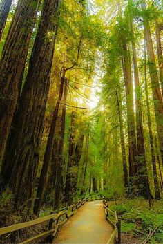 Muir Woods, San Francisco Bay Area, California