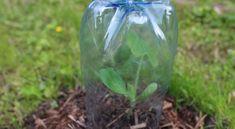 Palántanevelés műanyag flakonban Glass Vase, Crochet, Garden, Garten, Lawn And Garden, Ganchillo, Gardens, Crocheting, Gardening