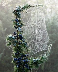 The only time I can stand spiders and their webs... in a pretty dew photo!