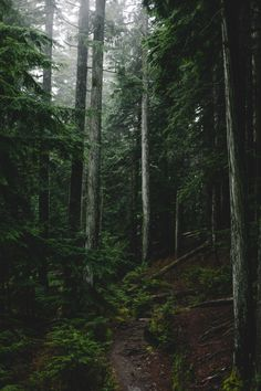 """xshaydx: """" Just another walk in the woods in BC photo : """" This landscape is reflective of the nature our can expect when we, take them to the &. Dark Green Aesthetic, Nature Aesthetic, Slytherin Aesthetic, Walk In The Woods, Dark Forest, Aesthetic Pictures, Aesthetic Wallpapers, Hogwarts, Twilight"""