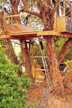 Mini-Ramp skating in a tree, this is awesome.  Maybe add some plexiglass walls?
