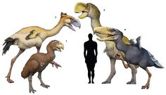1. Gastornis parisiensis 2. Phorusrhacos longissimus 3. Dromornis autralis 4. Kelenken guillermoi