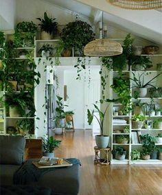 Living Room Decoration With Plants Ideas You'll Like; Living Room Decoration With Plants; Plants In Living Room; Living Room With Plants Deocr; House Plants Decor, Indoor Plant Decor, Wall Of Plants Indoor, Indoor Plant Shelves, Plant Wall Decor, Indoor Water Garden, Decoration Plante, Home And Deco, Room Inspiration
