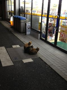 These cats waiting for the 7-Eleven to open. | 31 Animal Pictures You Cannot Explain