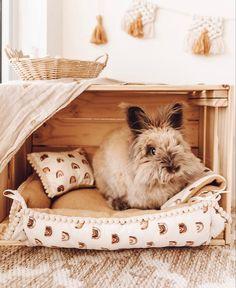 Diy Bunny Cage, Diy Bunny Toys, Diy Guinea Pig Cage, Bunny Cages, Guinea Pigs, Pet Bunny Rabbits, Pet Rabbit, Rabbit Habitat, Bunny Room