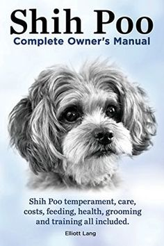 The Shih-Poo is a fun-loving and energetic little fellow. Although he doesn't need loads of exercise, he is spunky when he wants to play.