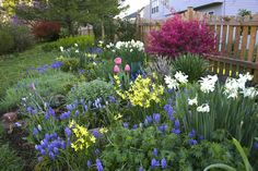 Wendy's garden in Virginia, Day 1 - FineGardening