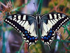 Butterfly - Schmetterling