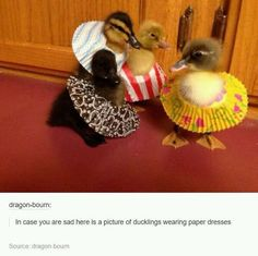 10 Cute Pictures In Case You Have A Sad Day.