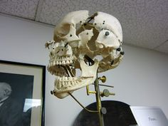 disarticulated skull mount